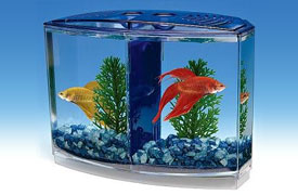 Betta Aquariums