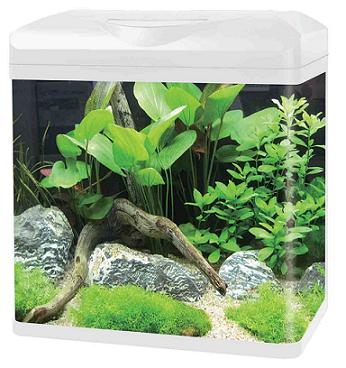 Curved Corner Glass Aquarium E380