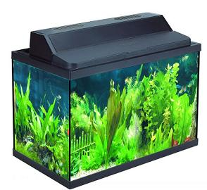 Rectangular Glass Aquarium X-520