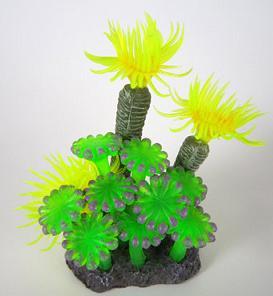 or_coral6.jpg