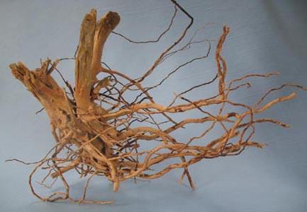 or_roots.medium.jpg