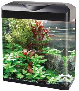 Curved Corner Glass Aquarium E300 Tarkus Aqualife